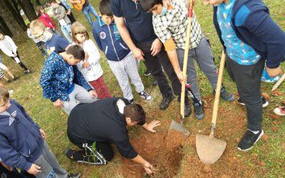 Sadimo in rešujemo drevesa