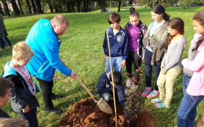 SAJENJE DREVESA MIRU – ENO TREE PLANTING DAY