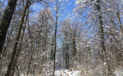 Sprehod v zimski pravljici